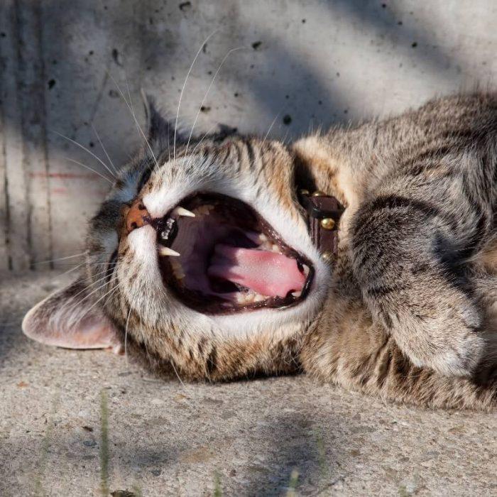 In slaap vallen tijdens een meditatie: zo blijf je wakker